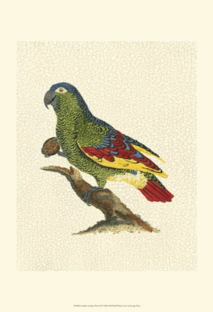 Crackled Antique Parrot II by George Shaw art print