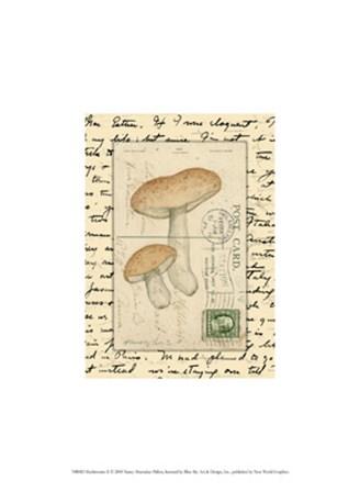 Mushrooms II by Nancy Shumaker art print