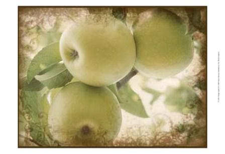 Vintage Apples II by Jason Johnson art print