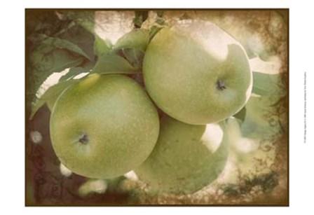 Vintage Apples III by Jason Johnson art print