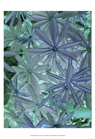 Woodland Plants in Blue IV by Sharon Chandler art print