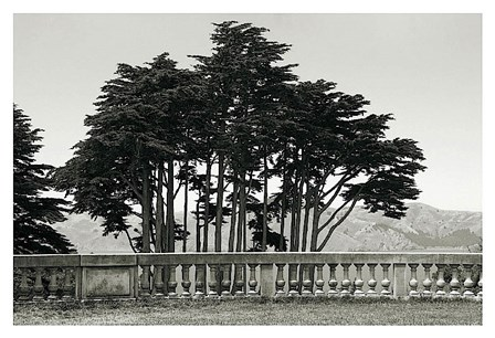 Cypress Trees and Balusters by Christian Peacock art print
