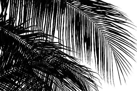 Palms 3 by Jamie Kingham art print