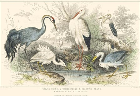 Herons, Egrets and Cranes by J. Stewart art print