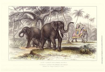 Asiatic Elephants by J. Stewart art print