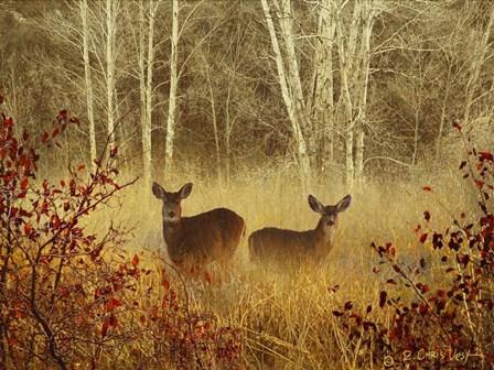 Foggy Deer by Chris Vest art print