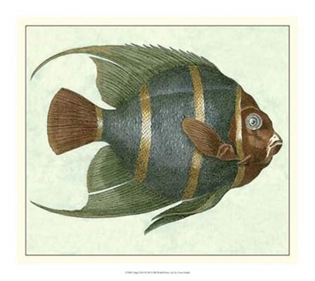 Angel Fish I by Vision Studio art print