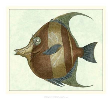 Angel Fish II by Vision Studio art print