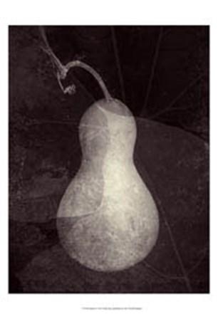 Gourd I by Elena Ray art print