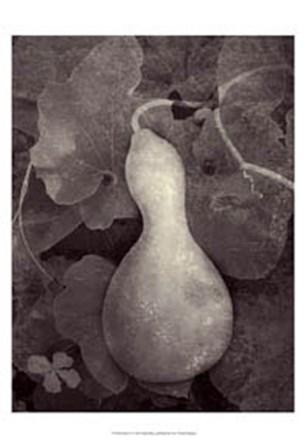 Gourd V by Elena Ray art print