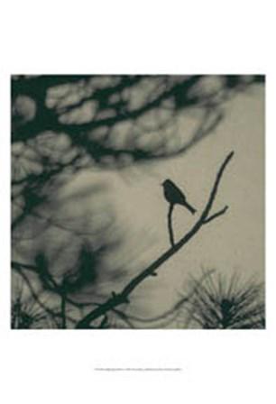 Caligraphy Bird I by Elena Ray art print