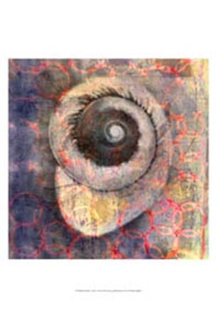 Seashell-Snail by Elena Ray art print