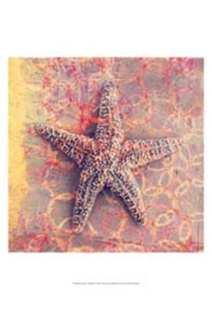 Seashell-Starfish by Elena Ray art print