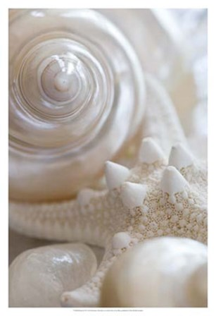 Pearlesce II by Christine Zalewski art print