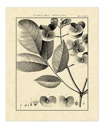 Vintage Botanical Study V by Charles Francois Sellier art print