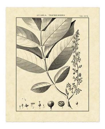 Vintage Botanical Study VI by Charles Francois Sellier art print