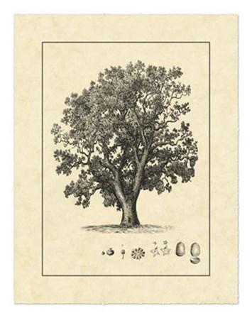 Vintage Tree II by Vision Studio art print
