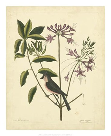 Bird & Botanical I by Marc Catesby art print