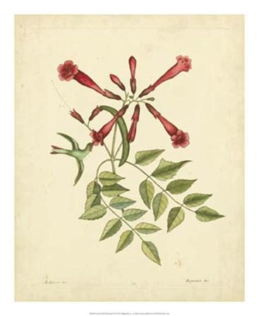 Bird & Botanical VI by Marc Catesby art print