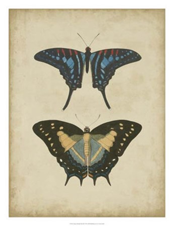 Antique Butterfly Pair III by Vision Studio art print