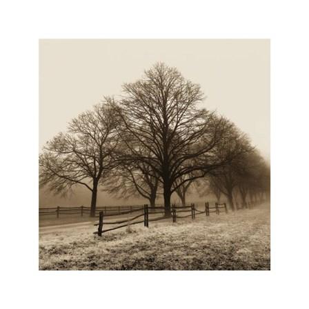 Row of Trees by Harold Silverman art print
