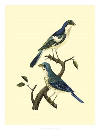 Vintage Bird Pair I by Levaillon art print