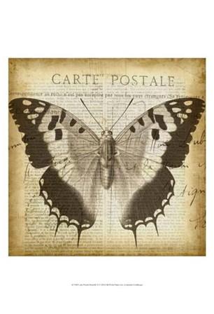 Carte Postale Butterfly II by Jennifer Goldberger art print