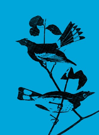 Starlings by George Dilorenzo art print
