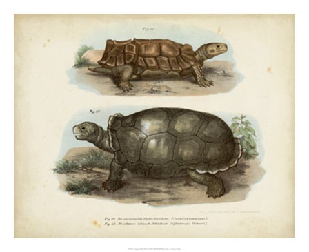 Antique Turtle Pair I by Vision Studio art print