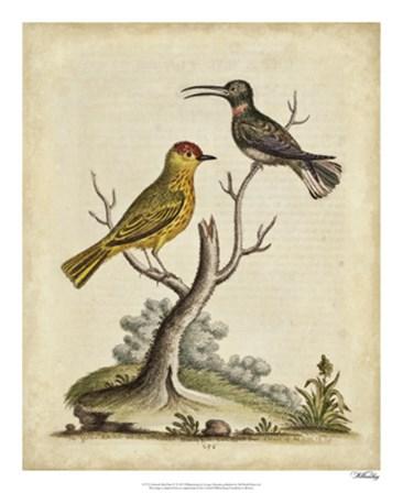 Edwards Bird Pairs IV by George Edwards art print