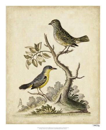Edwards Bird Pairs VII by George Edwards art print