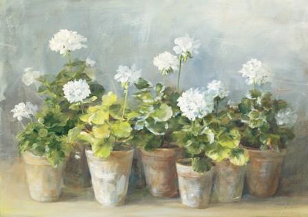 White Geraniums by Danhui Nai art print