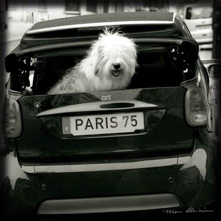 Paris Dog I by Marc Olivier art print