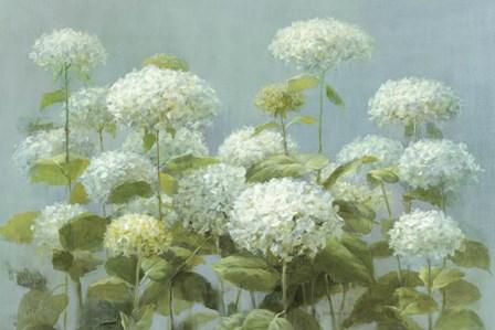White Hydrangea Garden by Danhui Nai art print