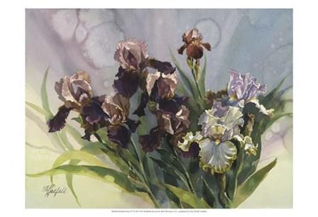 Hadfield Irises IV by Clif Hadfield art print