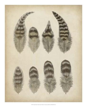 Vintage Feathers I art print