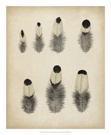 Vintage Feathers II art print