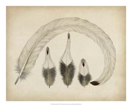 Vintage Feathers IV art print