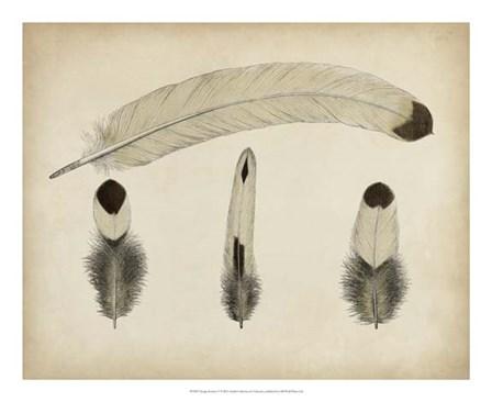 Vintage Feathers V art print