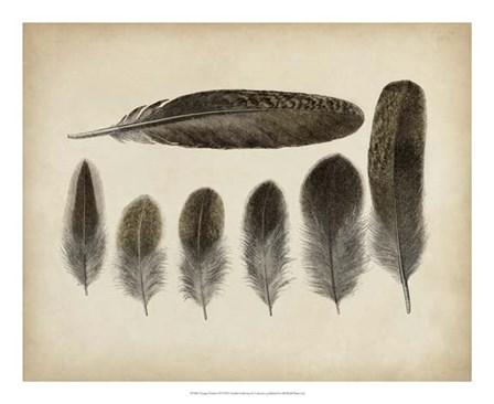 Vintage Feathers VI art print