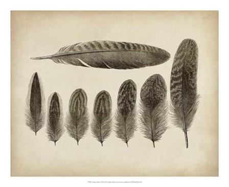 Vintage Feathers VIII art print