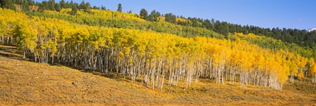 Trees in a field, Dallas Divide, San Juan Mountains, Colorado by Panoramic Images art print