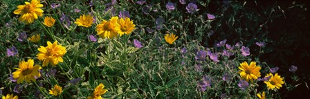 Flowers in a botanical garden, Buffalo And Erie County Botanical Gardens, Buffalo, Erie County, New York State by Panoramic Images art print