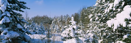 Snow covered trees in a forest, New York State, USA by Panoramic Images art print