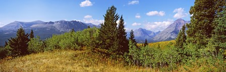 Trees with mountains in the background, Looking Glass, US Glacier National Park, Montana, USA by Panoramic Images art print