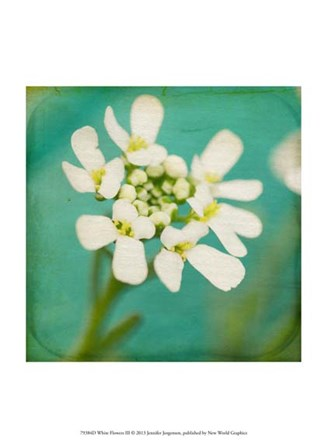 White Flowers III by Jennifer Jorgensen art print