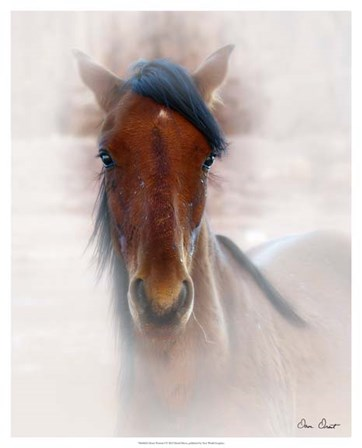Horse Portrait I by David Drost art print