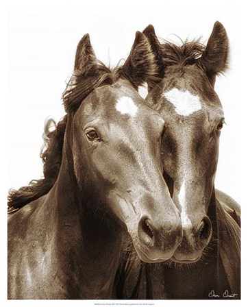 Horse Portrait III by David Drost art print