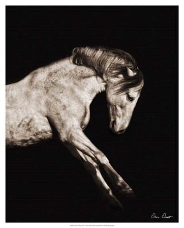 Horse Portrait IV by David Drost art print
