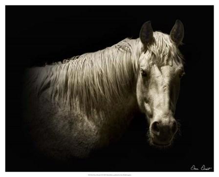 Horse Portrait VI by David Drost art print